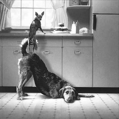 cachorro animal cuidado