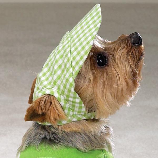 yorkshire cachorro raça cão-de companhia apartamento