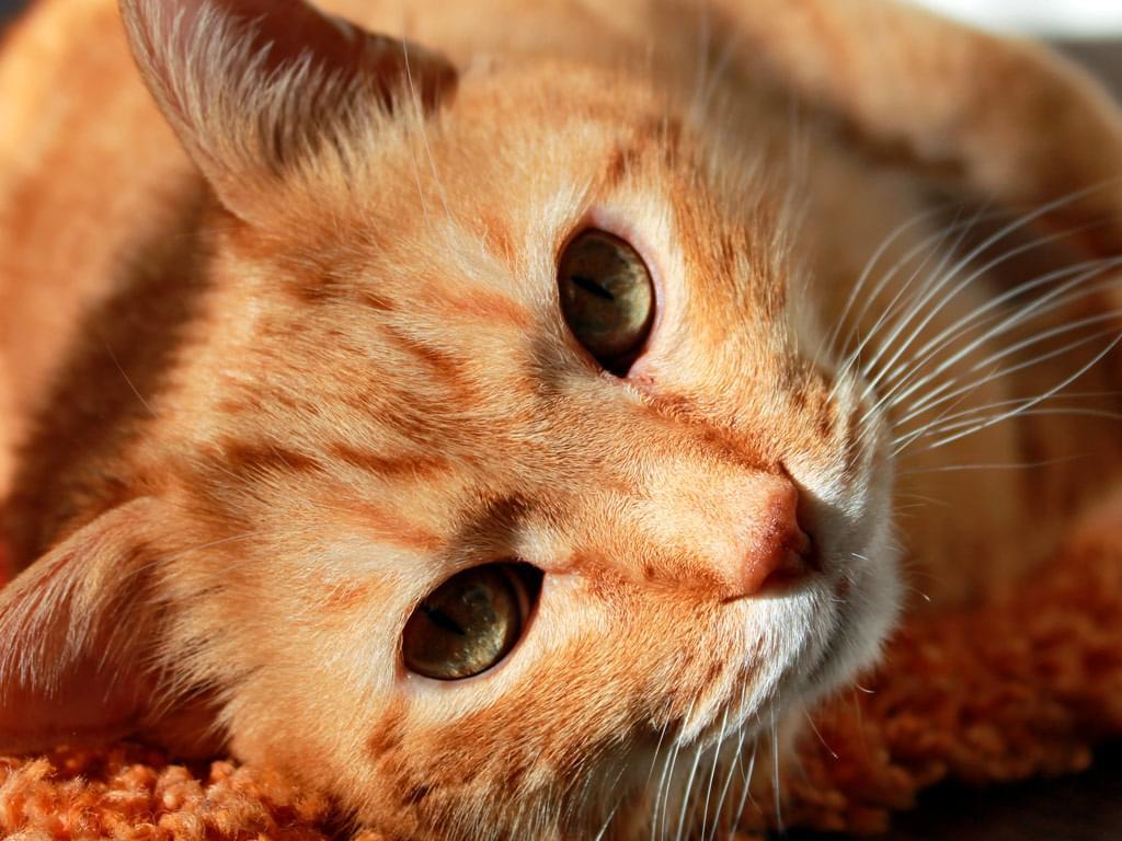 gato cuidado gatos