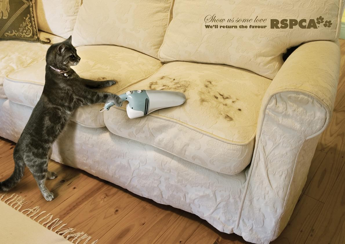 gato rspca amor cuidado