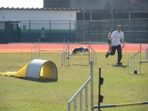 agility paulista cachorro exercicio huber gaia