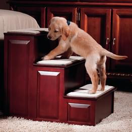 cachorro escada degrau coluna