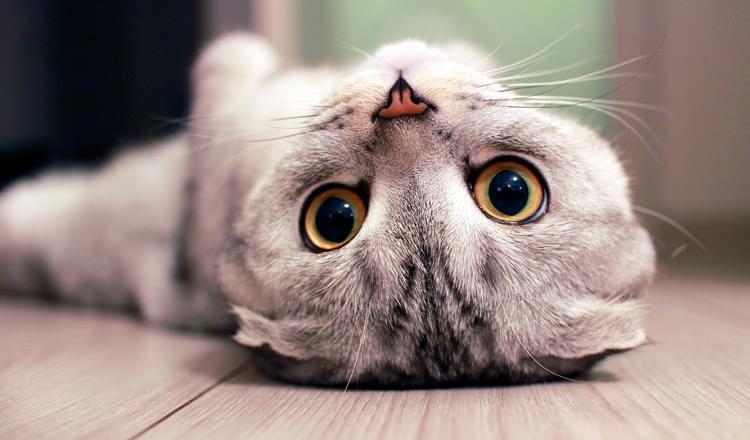 Conheça mais o comportamento felino