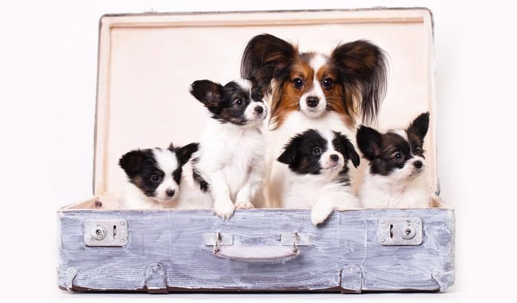 18 curiosidades sobre cachorros