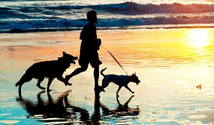 Seis dicas para dominar a caminhada do cão