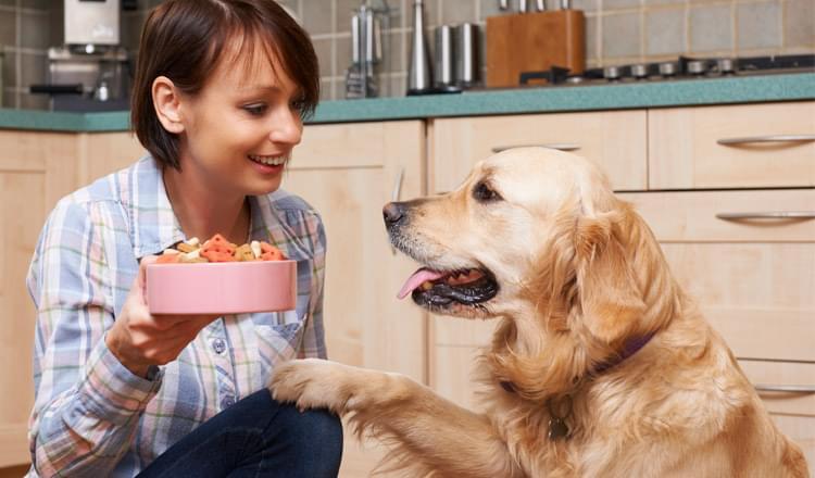 Alergia alimentar em cães
