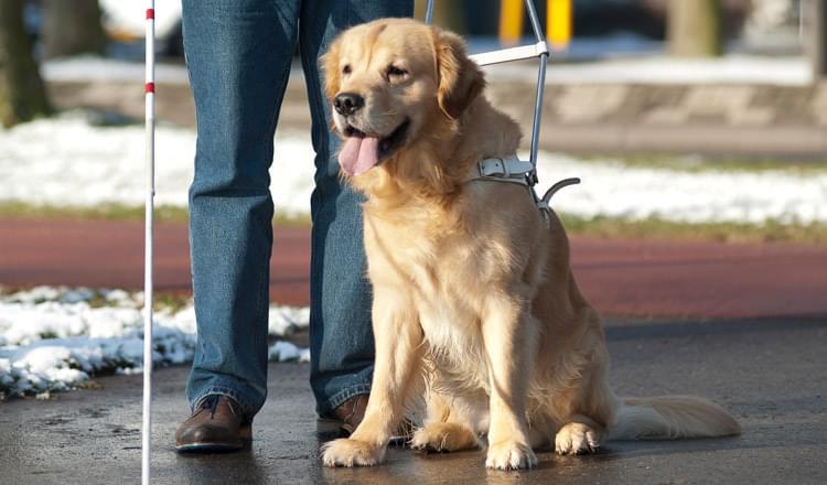 Tipos de cães de serviço