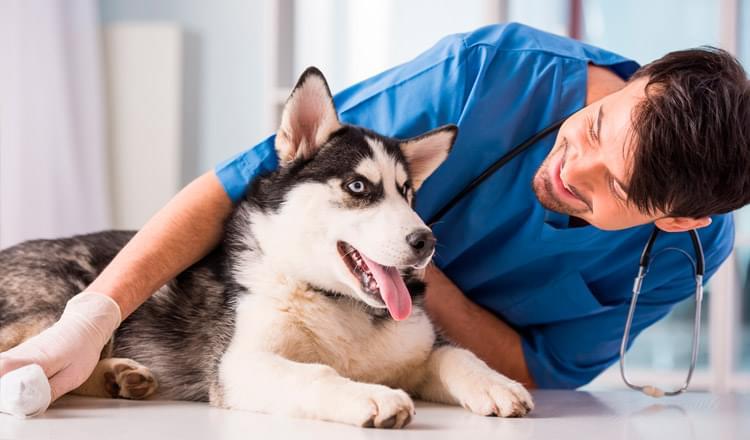 Como acostumar seu cão a ir ao veterinário