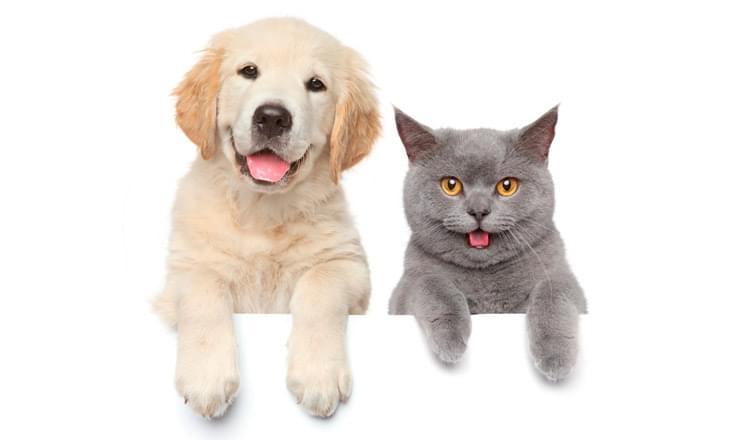 cães ou gatos