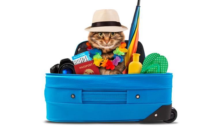 como transportar animais de estimação em viagens de ônibus e avião