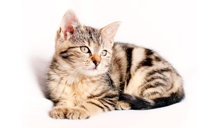 9 dicas para acalmar o seu felino