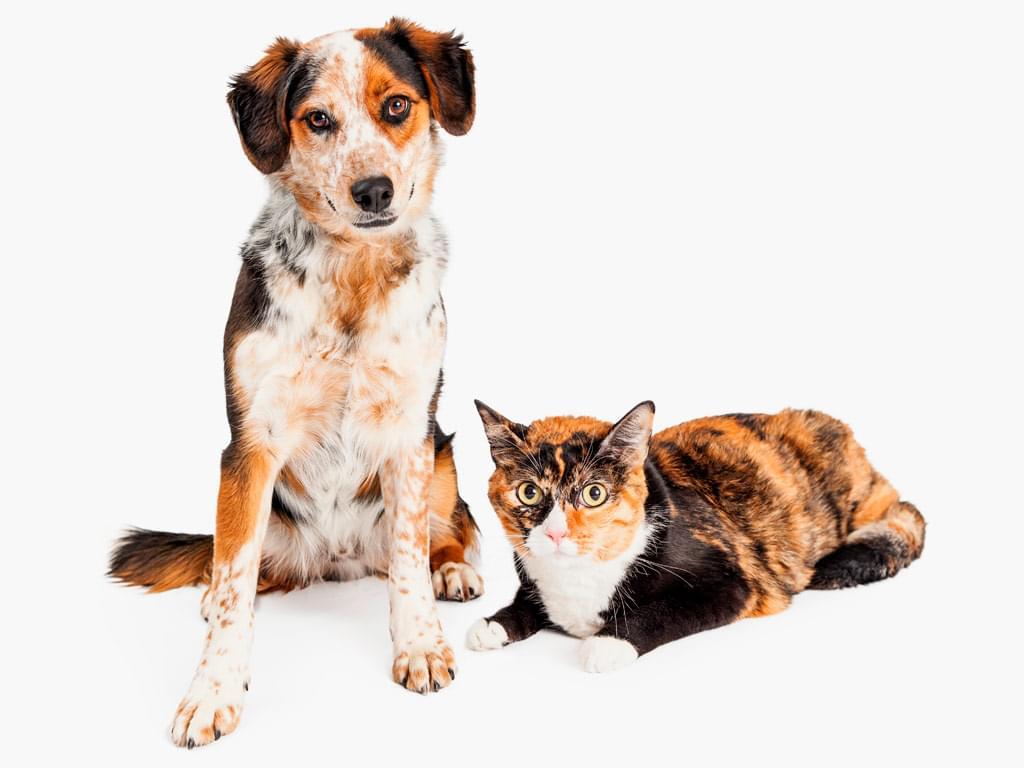 comportamento animal cachorro gato cuidado