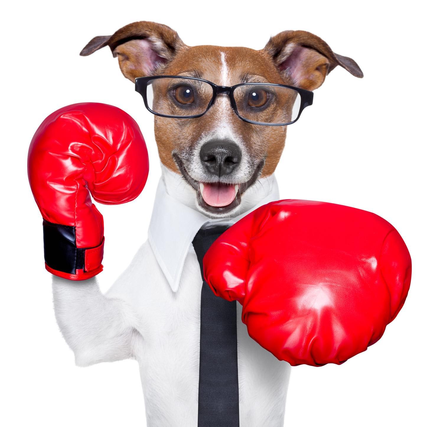 agressividade agressivo cachorro