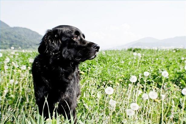 cachorro cuidado saude saudavel
