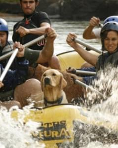 esportes radicais caes cachorro esporte radical canoagem bote