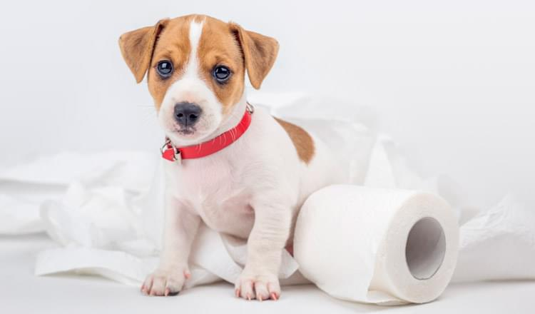 Alteracoes Urinarias em Animais