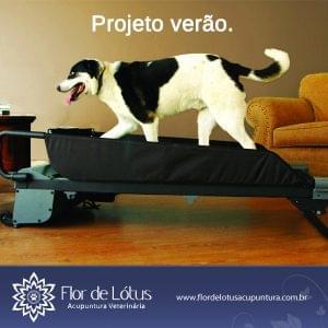 cachorros_precisam_de_exercicios