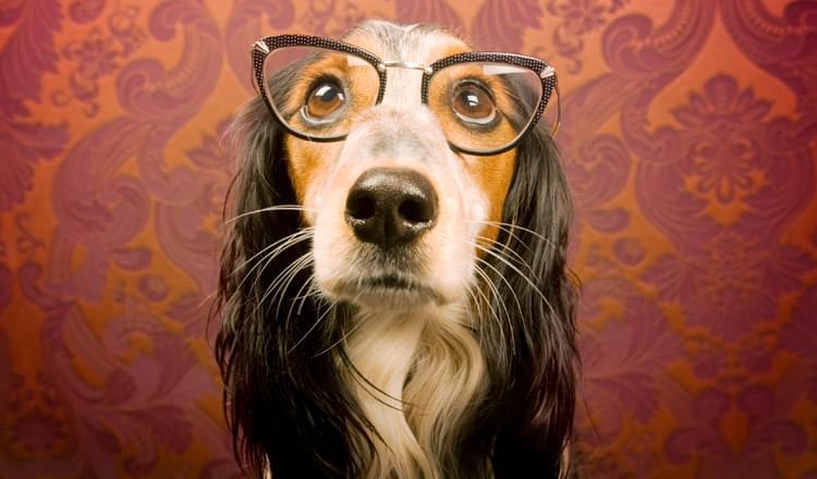 Problemas de visão em cachorros