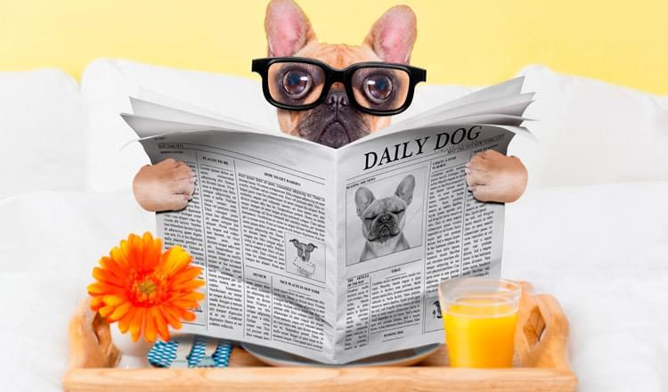 dicas para educar seu cão