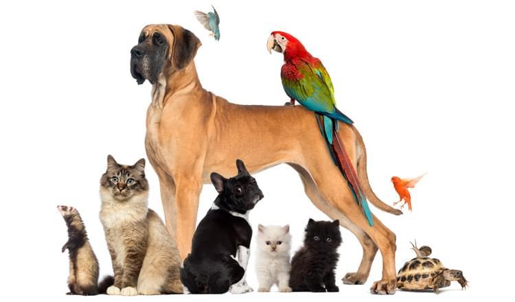 ibge fará censo sobre animais de estimação