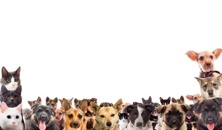 cães e seu controle em multidões