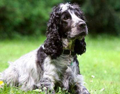 importância da tosa em animais de estimação