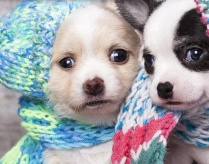 frio e os animais de estimação