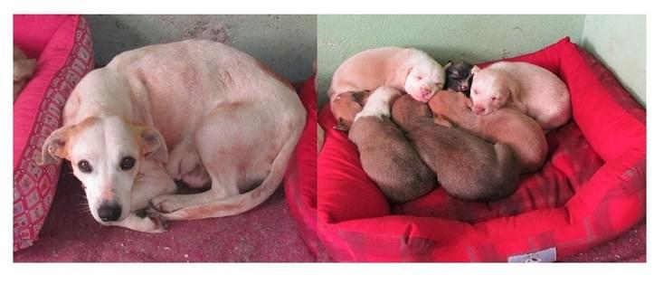 abandono adoção adote cachorro cachorra filhotes posse responsável abrigo