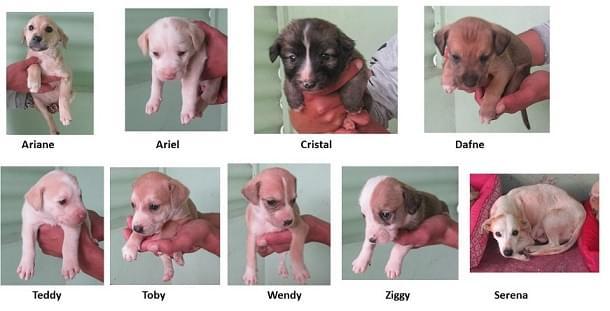 abandono adoção adote cachorro-cachorra filhotes posse responsável filhote macho fêmea